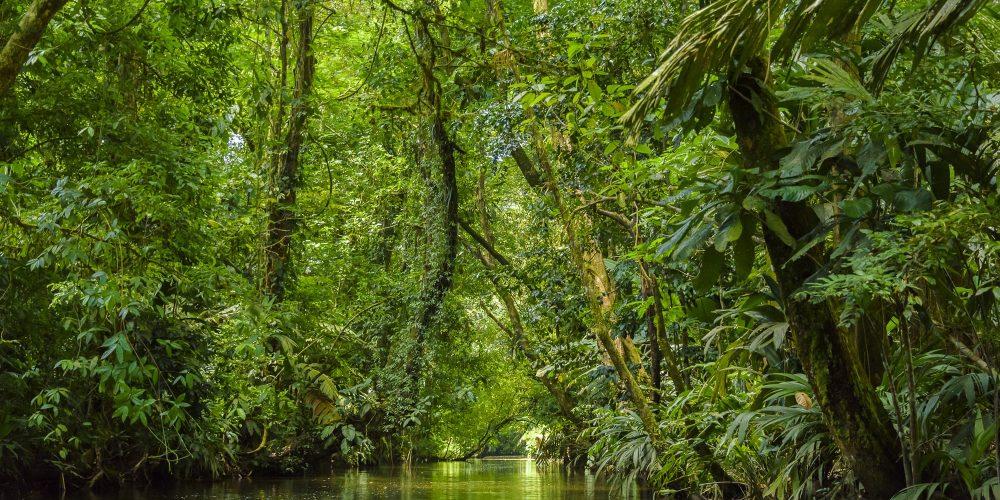 escape-the-white-of-winter-to-the-greens-of-costa-rica