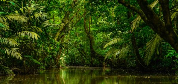 Discover-5-photo-opportunities-visiting-Tortuguero