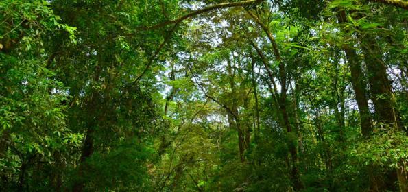 ECOTOURISM, A FRIENDLY VISIT WITH NATURE