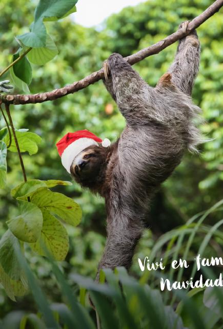 Christmas, Christmas … green Christmas!