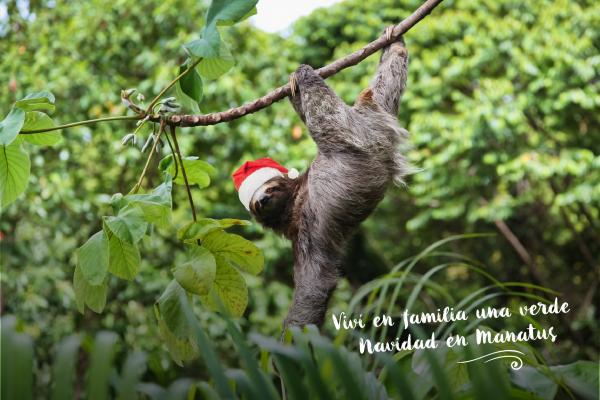 Navidad, Navidad… ¡verde Navidad!