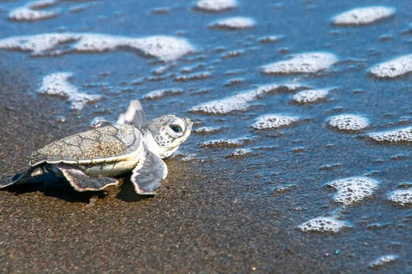 The Land of Turtles is a treasured place to nest